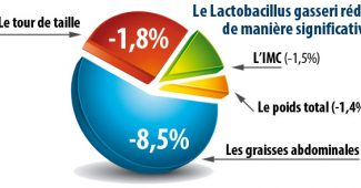 avis lactobacillus gasseri